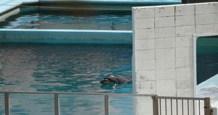 Photos and video taken by activists in March and August from outside the park show Honey floating in a tiny pool in an eerily empty facility. (The Dolphin Project)