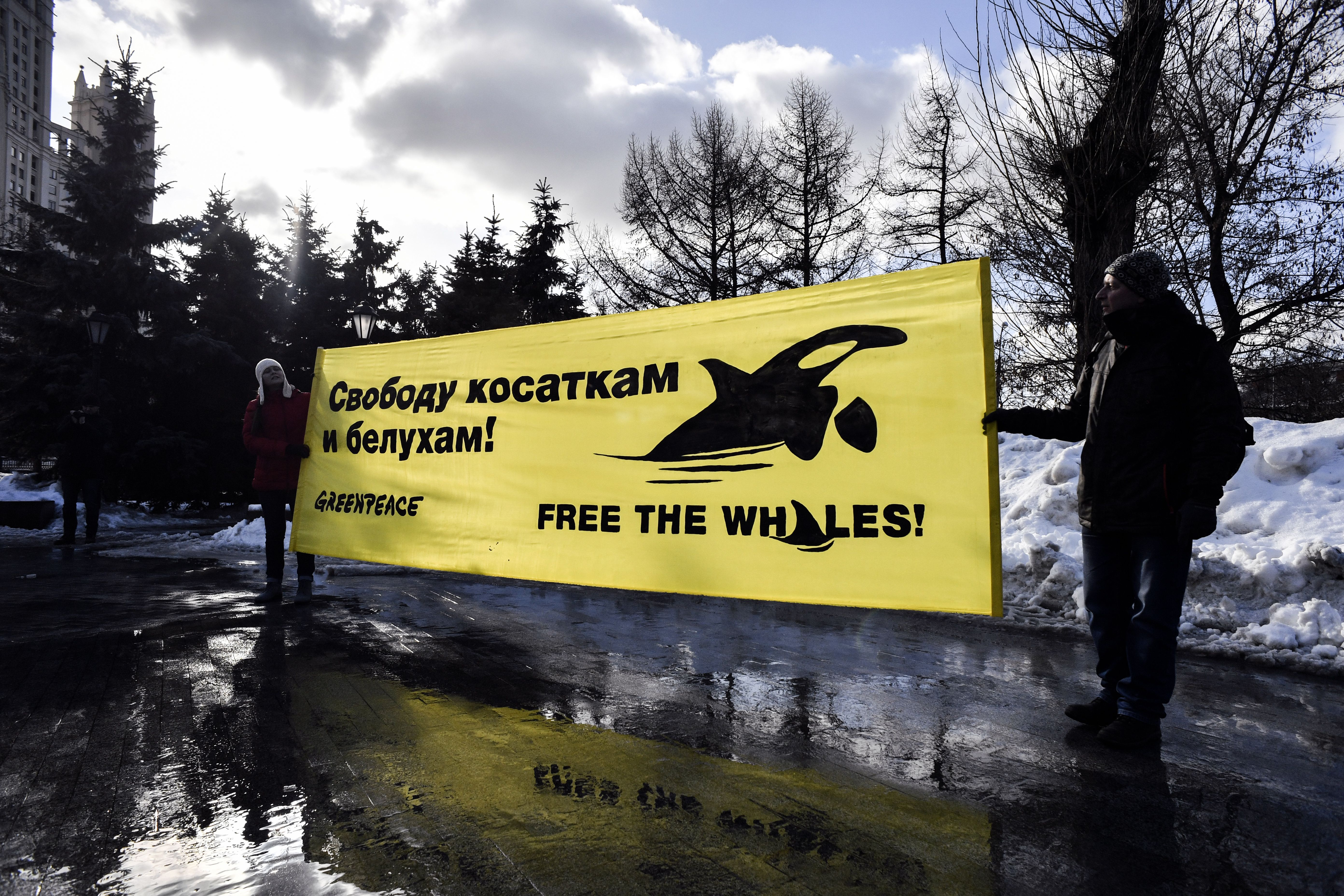 Greenpeace activists and supporters rally in Moscow on February 16, 2019, demanding the release of orcas and white whales held at a holding facility in the town of Nakhodka (Source: ALEXANDER NEMENOV/AFP/Getty Images)