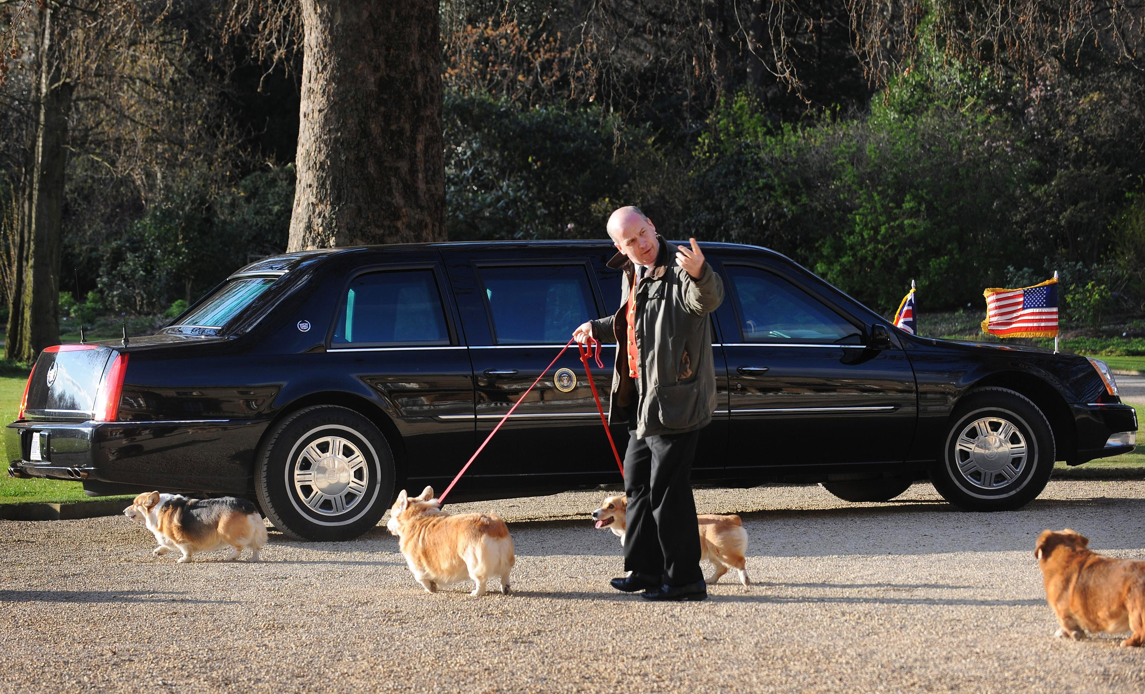 Queen Elizabeth II's Corgis are taken for a walk as they pass US President Barack Obama's car in the grounds of Buckingham Palace while he had an audience with the Queen on April 1, 2009 in London, England.  (Photo by Stefan Rousseau - WPA Pool/Getty Images)
