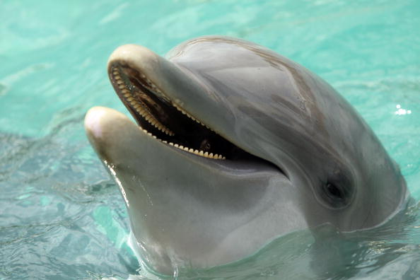 The dolphin has been exhibiting these behavioral changes for some weeks now (Source: Getty Images)