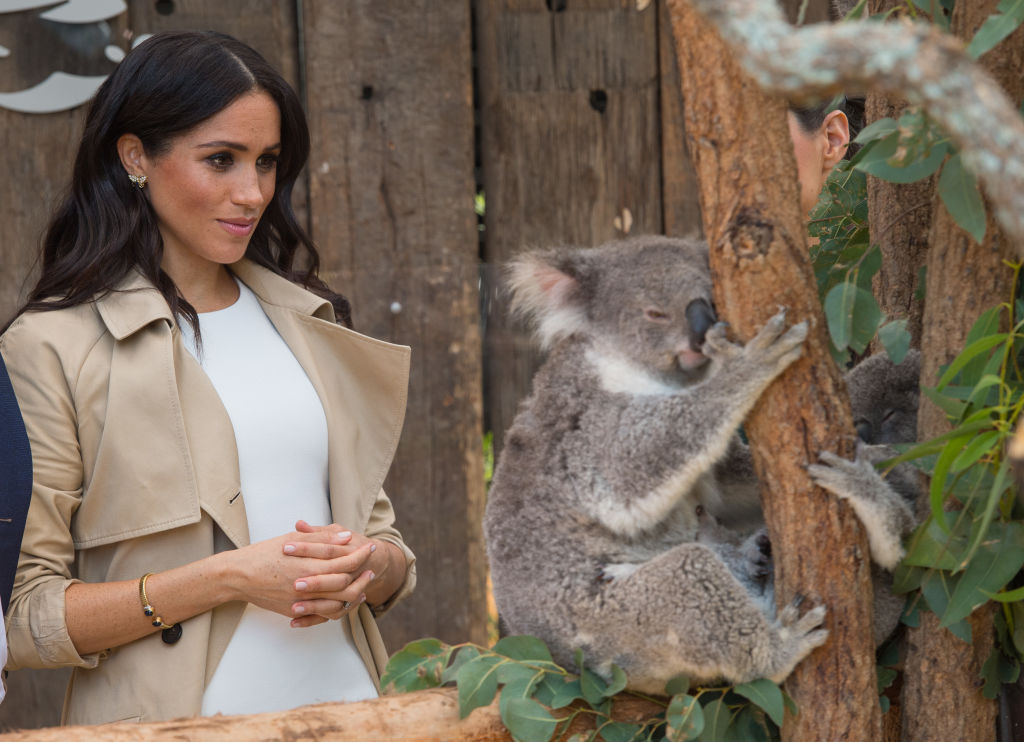 Meghan, Duchess of Sussex meets a Koala called Ruby during a visit to Taronga Zoo on October 16, 2018 in Sydney, Australia. The Duke and Duchess of Sussex are on their official 16-day Autumn tour visiting cities in Australia, Fiji, Tonga and New Zealand. (Photo by Dominic Lipinski - Pool/Getty Images)