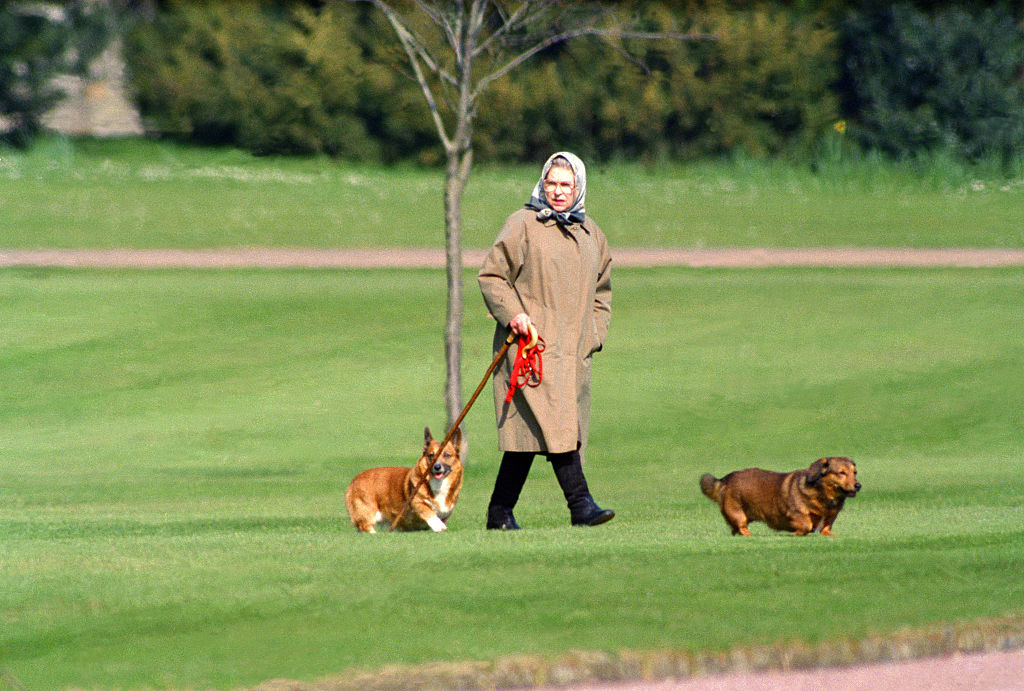 Queen Elizabeth II walking her dogs at Windsor Castle, on April 2, 1994 in Windsor, United Kingdom. (Photo by Julian Parker/UK Press via Getty Images)