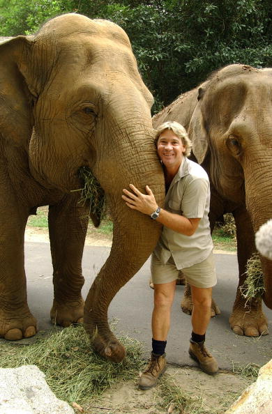 Steve Irwin poses with an elephant at Australia Zoo January 2, 2004 in Beerwah, Australia. (Photo by Australia Zoo via Getty Images)