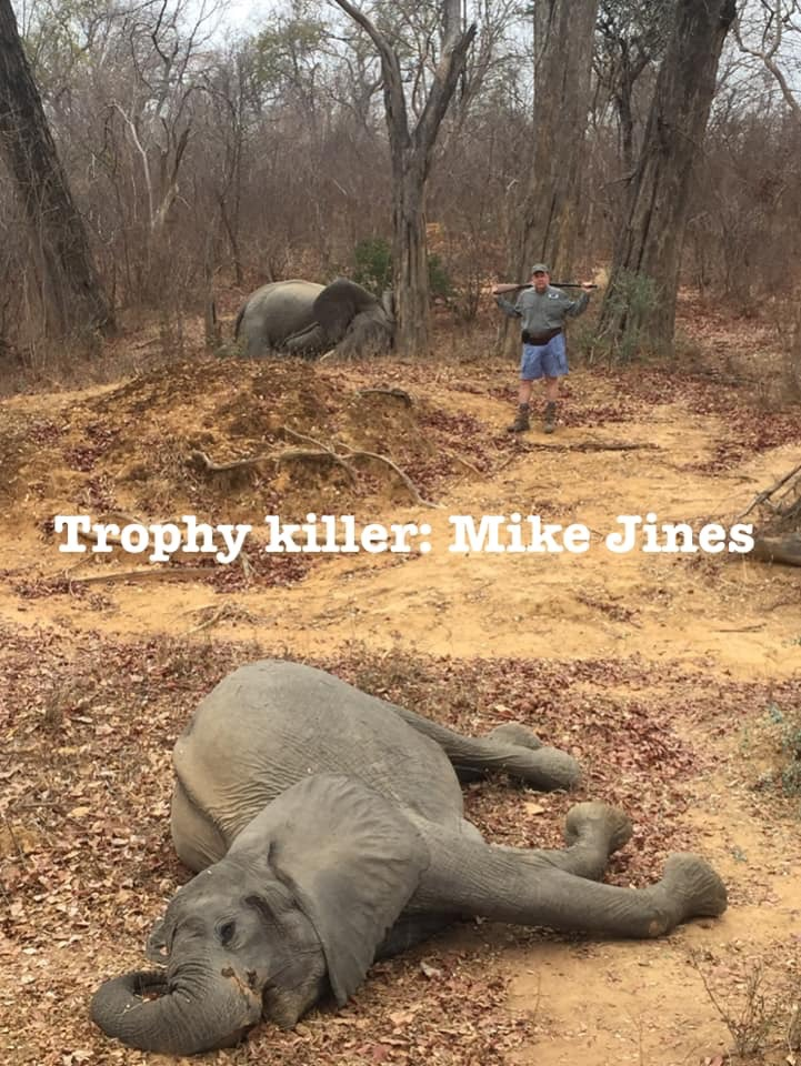 Jines has claimed he shot the elephants in self-defense (Source: Imgur)