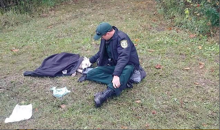 The officer can be seen with the injured dog in the picture. (Osceola County Sheriff's Office)