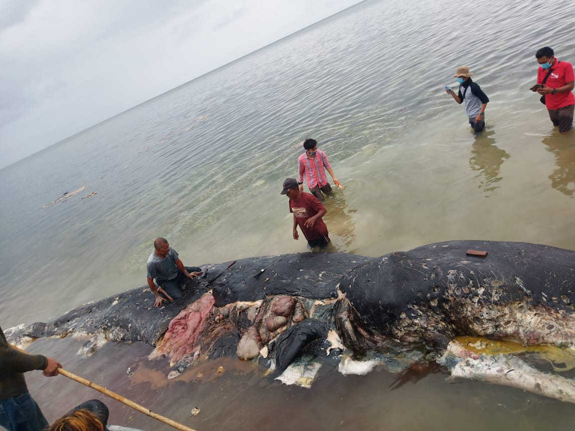 The whale found in Sulawesi, Indonesia had 115 plastic cups, four plastic bottles, 25 plastic bags, two flip-flops, a nylon sack and more than 1,000 other plastic pieces in its stomach. (Twitter)