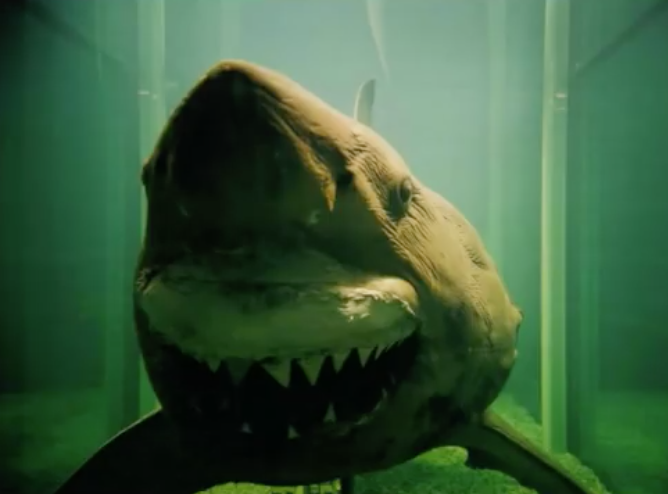 Rosie the dead shark is finally being relocated after her tank was vandalized (Source: YouTube)