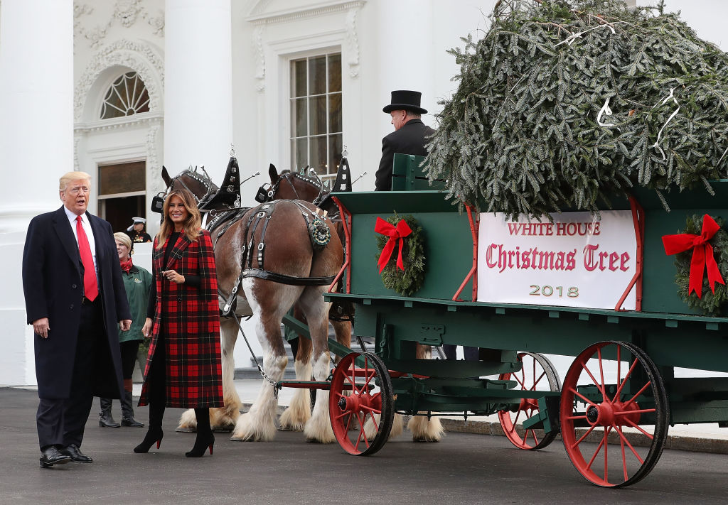 U.S. President Donald Trump and first lady Melania Trump look at the North Carolina grown Fraser Fir Christmas tree at the North Portico as it makes its way to the Blue Room for display at the White House on November 19, 2018, in Washington, DC. (Photo by Mark Wilson/Getty Images)