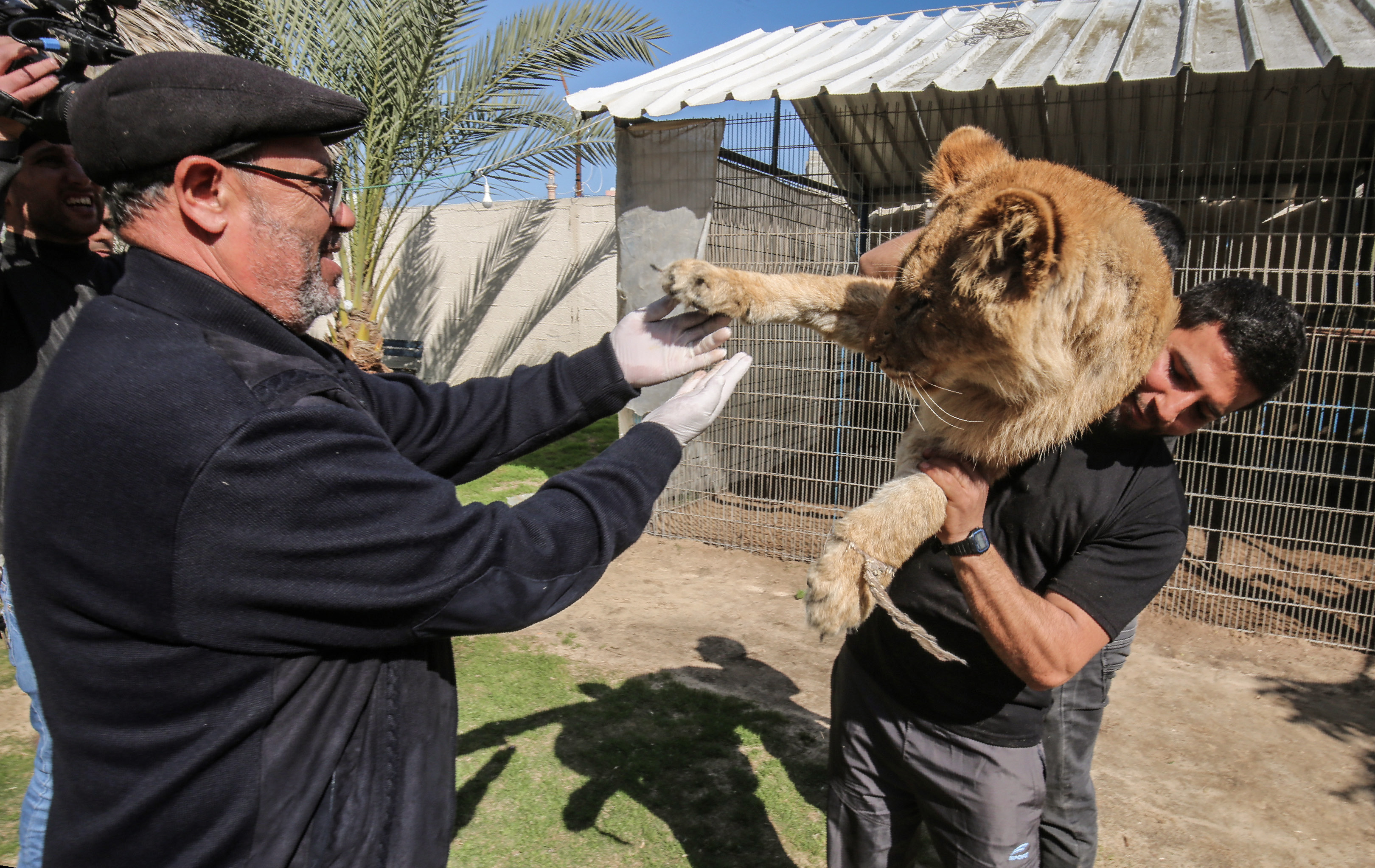 Palestinian veterinarian Fayyaz al-Haddad, reaches for the paw of the lioness 'Falestine' as she is held by another man, at the Rafah Zoo in the southern Gaza Strip on February 12, 2019. - The zoo in the war-battered Palestinian enclave is promoting itself as offering the chance to play with the 14-month-old declawed lioness, which is supposed to be placid enough to meet visitors. It is the latest unconventional animal care practice in Gaza where there is no specialized animal hospital with a few dilapidated zoos competing for business. (Photo by SAID KHATIB / AFP/Getty Images)